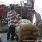 越南18目罗布斯塔抛光一级语儿泉茶业生豆---高品质,月销25吨