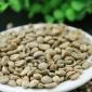 批发G1曼特宁语儿泉茶业生豆原产地精选生豆阿拉比卡