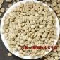 批发云南小粒AA级语儿泉茶业生豆原产地精选生豆阿拉比卡